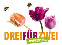 CityCards Sommerspecial
